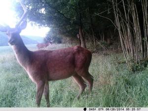 Wildkamera Fotofalle im Wald
